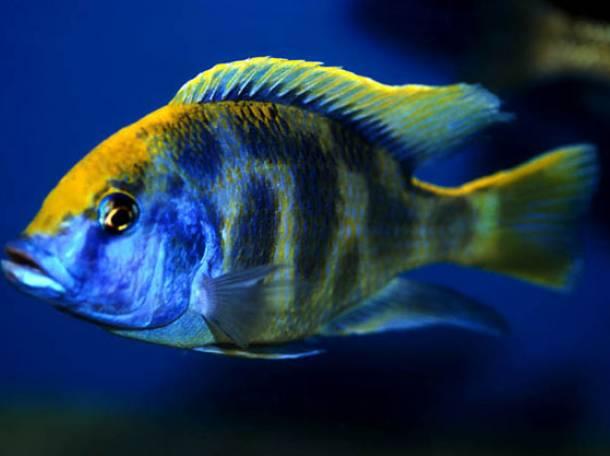аквариумы и рыбки, фотография 8
