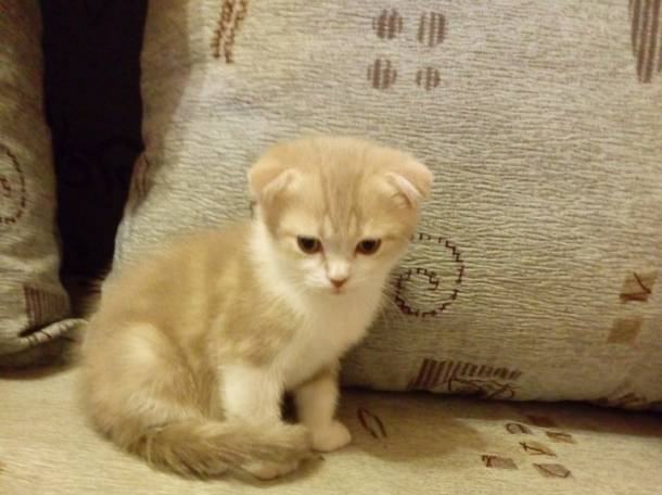 продаю  котят, фотография 1