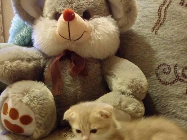 продаю  котят, фотография 5