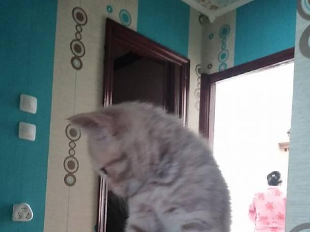 продаю  котят, фотография 9