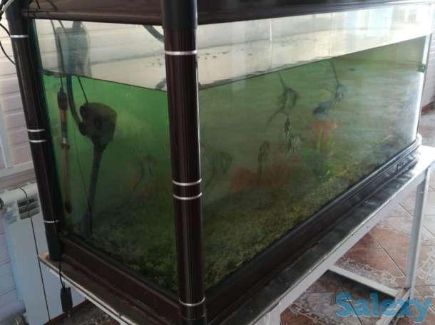 Продается аквариум с живыми рыбками, фотография 3