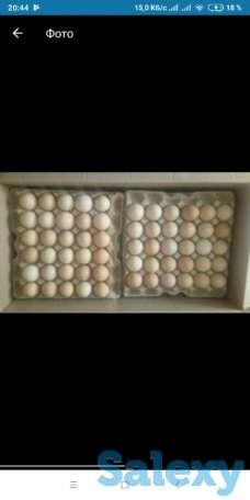 Инкубационные яйца бройлера кросс Арбор Айкрес, фотография 1
