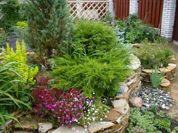 Озеленение двора, фотография 2