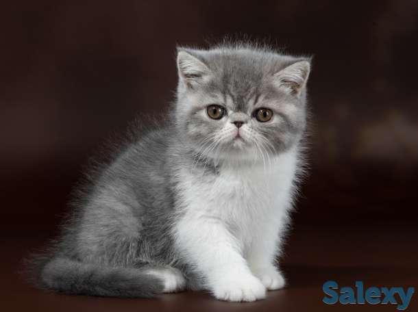 Котята, фотография 2