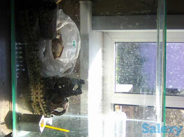 Продам аквариум, фотография 2