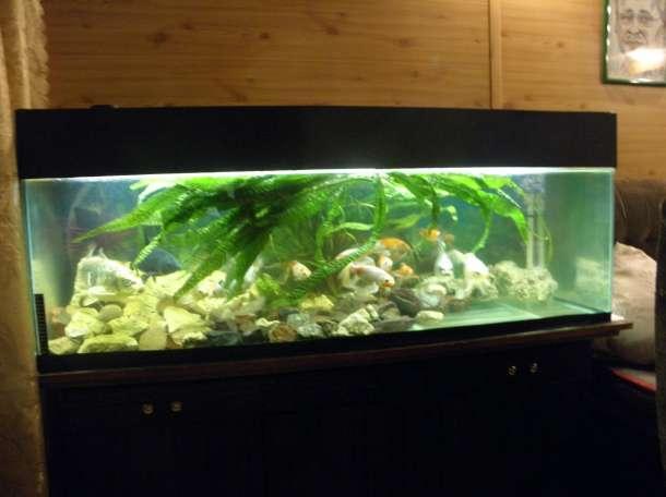 продам два аквариума, фотография 6