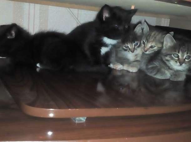Дарю котят, фотография 3