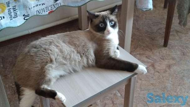 Пропала кошка, фотография 3