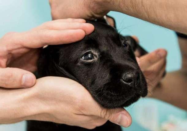 Ветеринарная клиника Dog-Premium , фотография 4