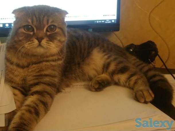 Ищу кота вислоухого, фотография 1