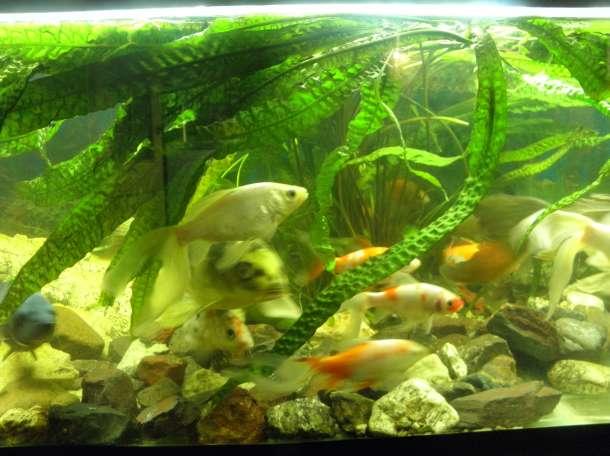 продам два аквариума, фотография 9
