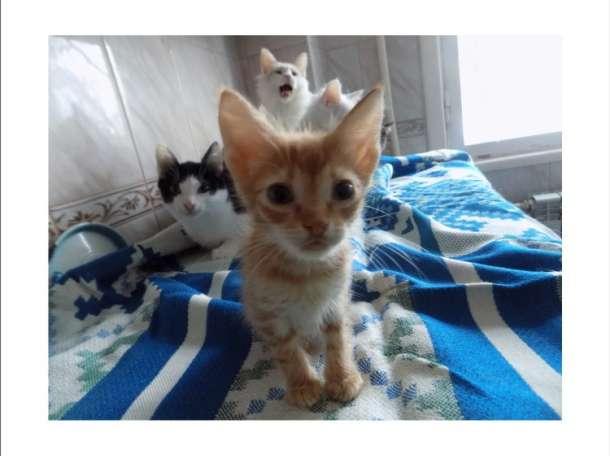 Отдам котов кошек и котят, фотография 1