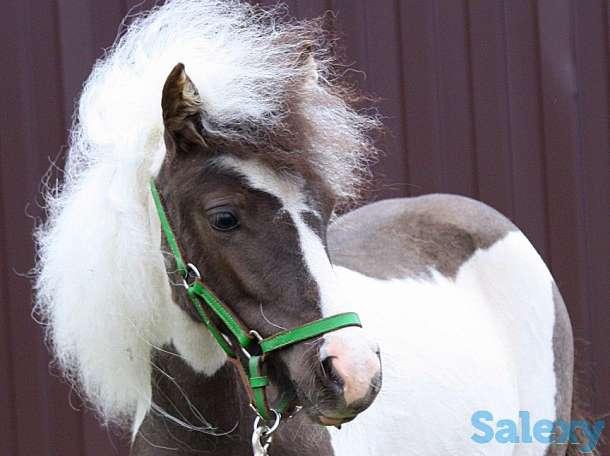 Продажа пони. Пони-ферма., фотография 2