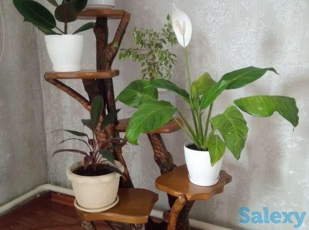 Цветочница и цветы, фотография 1