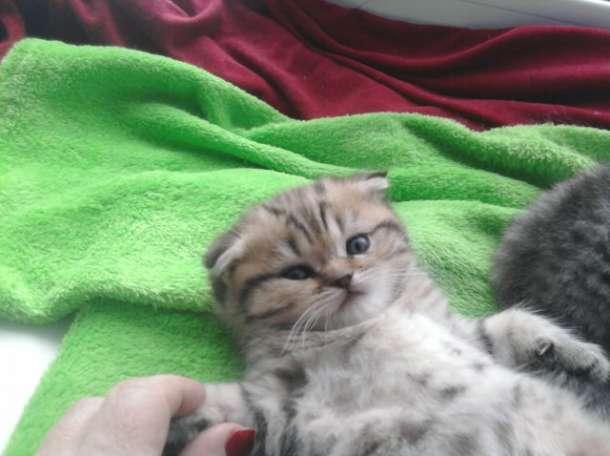 продам котят, фотография 1