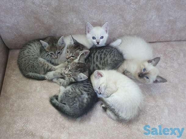 Отдам котят в заботливые и ОТВЕТСТВЕННЫЕ семьи., фотография 1