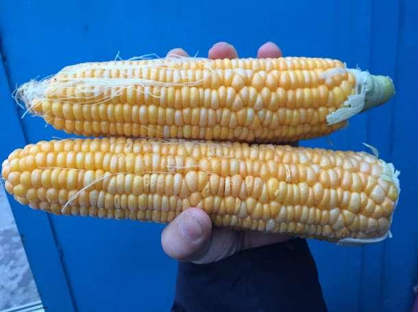 Кукуруза, фотография 3