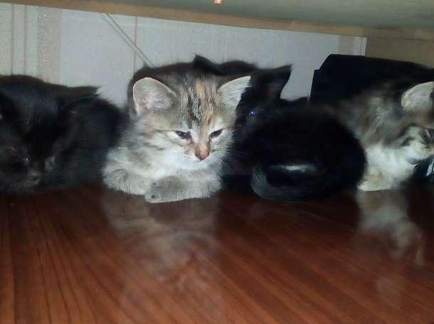Дарю котят, фотография 10