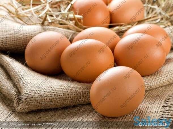 Яйцо куриное, фотография 1