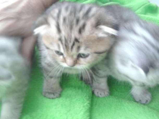 продам котят, фотография 5