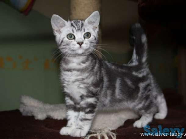 Самые трогательные бенгальские котята, фотография 4