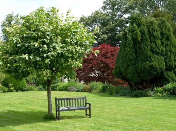 посадка деревьев и растений, фотография 1