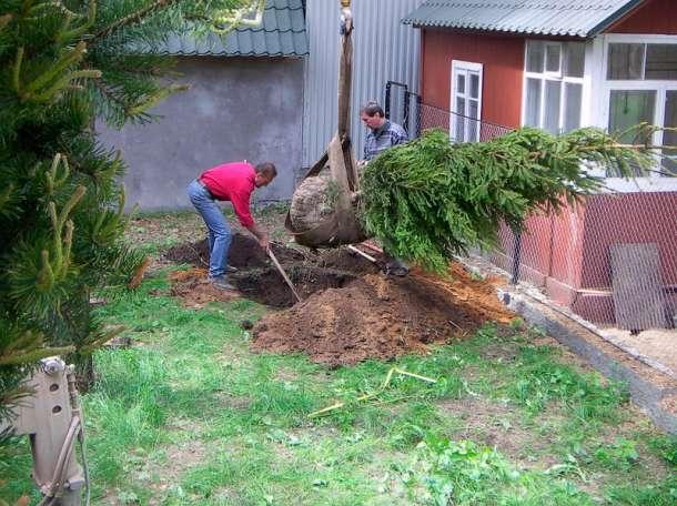 посадка деревьев и растений, фотография 6